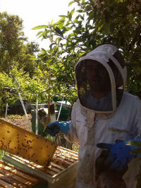 apicultor Alicante