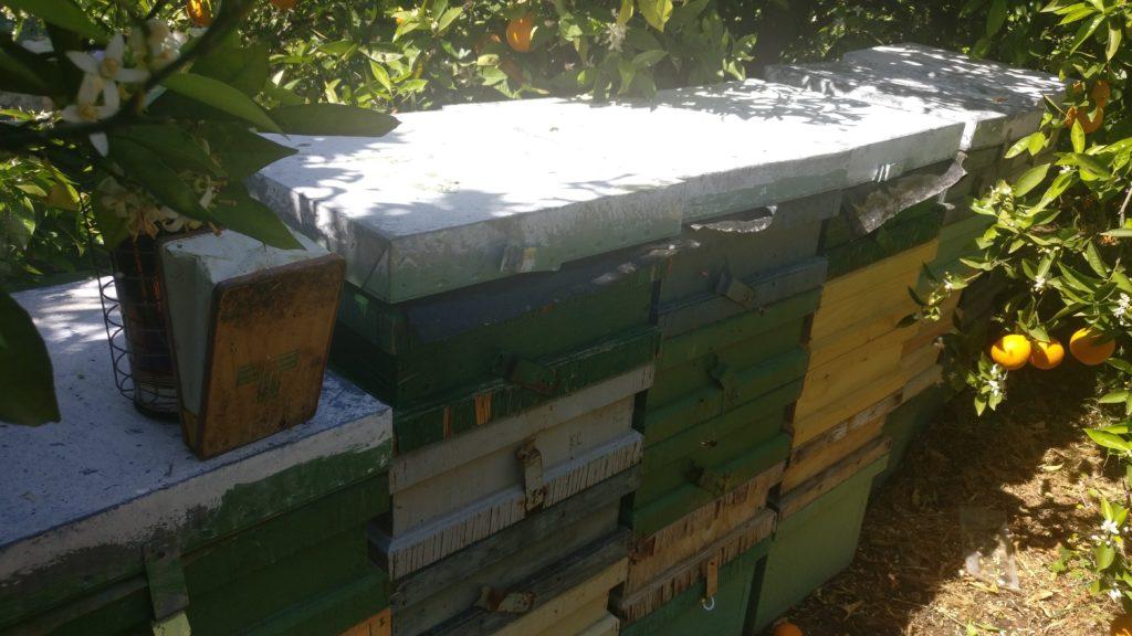 Comprar miel cruda de azahar
