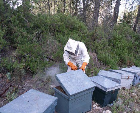 Miel ecologica