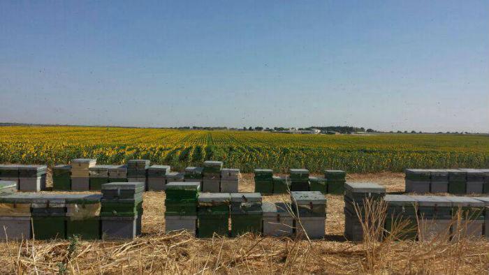 colmenas ecologicas miel