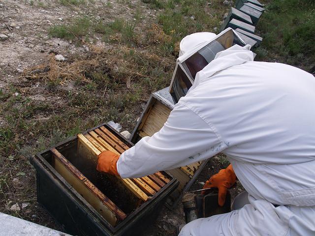Miel natural de la colmena